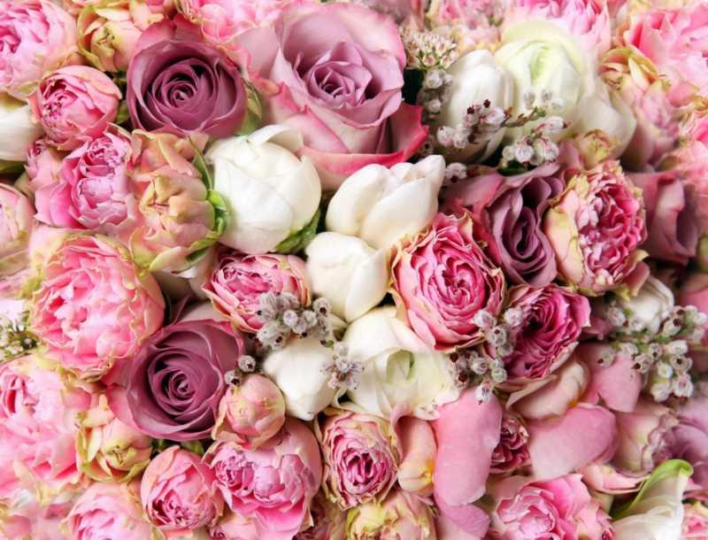 Доставка цветов по москве и области ссемена комнатных цветов на заказ