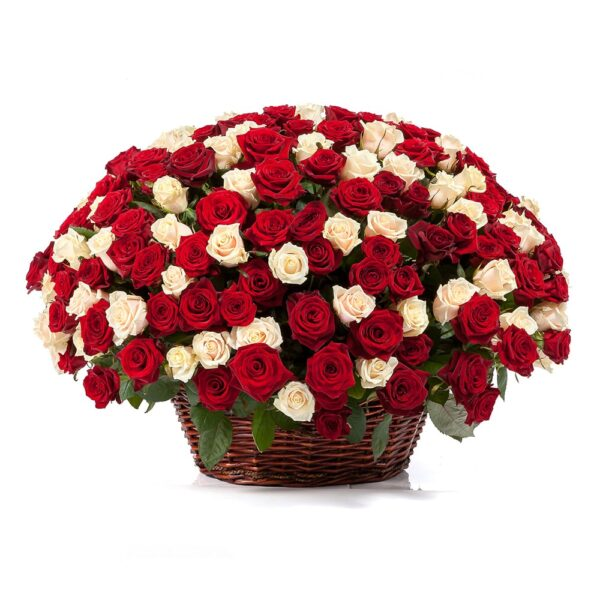красно-белые розы в корзине